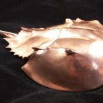 Copper Clad Horseshoe Crab