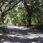 Howard Street Shade On Ocracoke Island