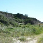 A Sound Side Path At Springer's Point On Ocracoke Island - 2014