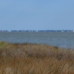 Ocracoke as seen from Henry Pigot's back yard - 2014