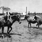 Ocracoke Ponies roaming free - circa 1950s