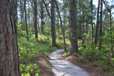 Hammock Hills Nature Trail On Ocracoke Island