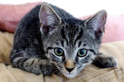 kitten-on-lap 400px