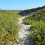 Beach Access Trail At North End Of Ocracoke Island