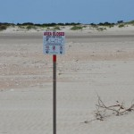 Tern Nesting Sign On Ocracoke Island Beach