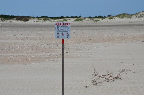 Tern Nesting Sign On Ocrae Island Beach