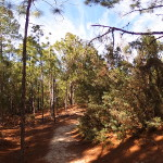 Hammock Hills Trail High Ground Photo Sphere