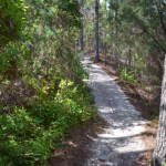 Going Up On Hammock Hills Trail On Ocracoke Island