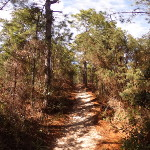 Hammock Hills Nature Trail - Heading Uphill Photo Sphere