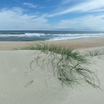 Ocean From Dunes Photo Sphere