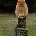 Ocracat On Post