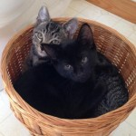 Ocracats In Basket