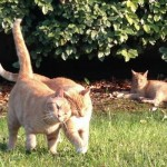Ocracats
